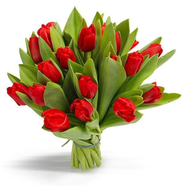 Тюльпаны заказать цветы