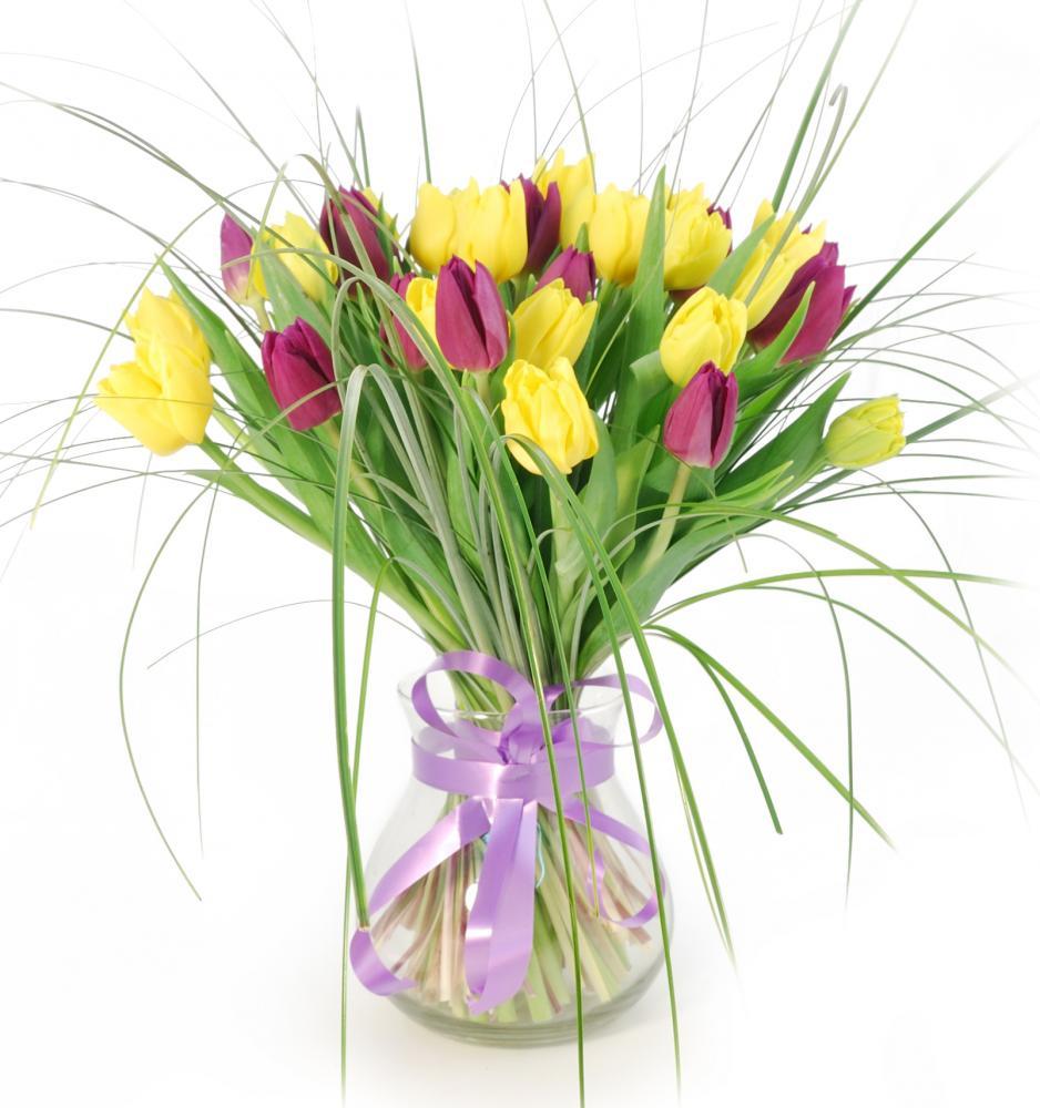 Цветы фанфан-тюльпан